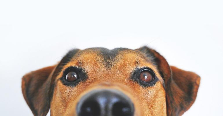 dog-838281_1920.jpg