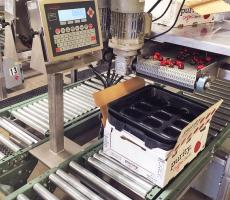 This system uses Cardinal Scale's digital fill control software that comes standard on the 225 indicator and an RB4 relay to control the speed of the conveyor belt filling the cherry packages.