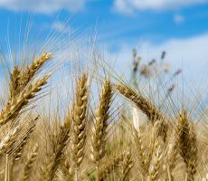 KSU and AIB are teaming up to present a HACCP workshop for grain millers. Image courtesy of Flickr user sleepyclaus