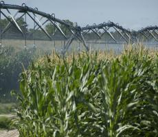 Cargill is expanding its line of non-GMO ingredients. Image courtesy of USDA NRCS Florida